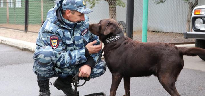 Служебная собака и кинолог
