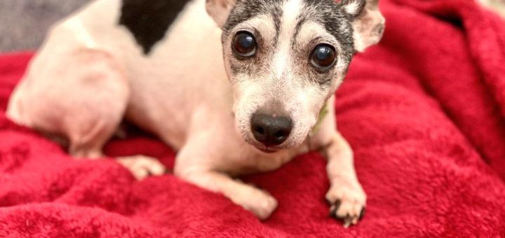 Собака найдена через 12 лет