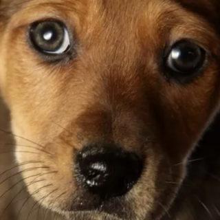 В США прошел день собак