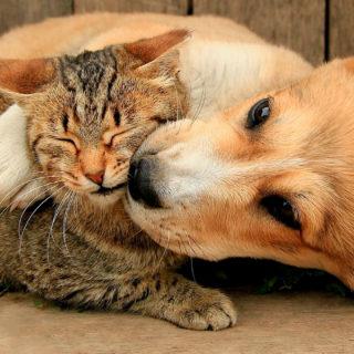 клички для собак и кошек