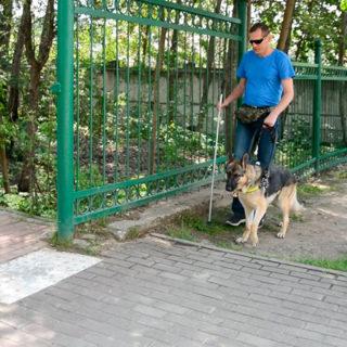 собака поводырь ведет слепого