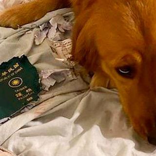 собака испортила проездной билет