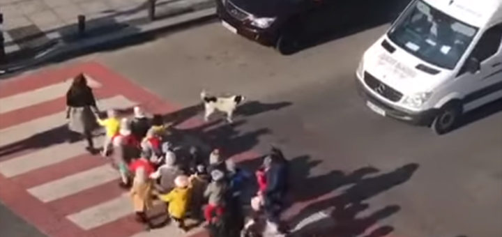 собака на улице Батуми