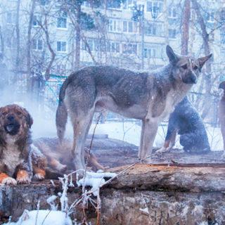 Красноярск: бездомные собаки