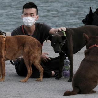 коронавирус у владельцев кошек и собак