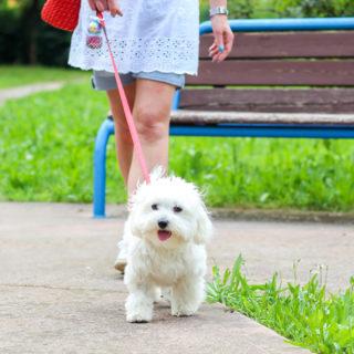коронавирус у собак: что нужно знать