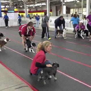 спорт с собакой в зале
