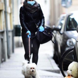 прогулка с собакой во время карантина