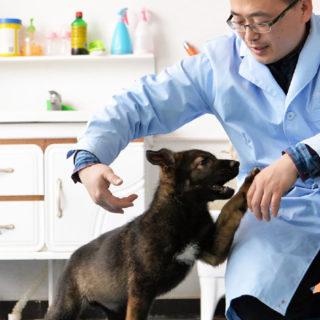 Китай - собак больше нельзя есть