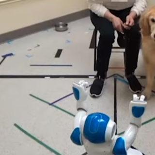 собака и робот