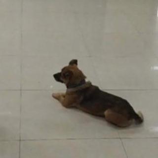 собака ждала хозяина несколько месяцев