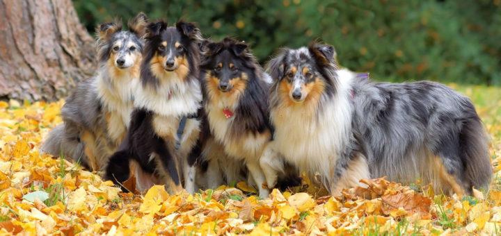 собаки для детей - список пород