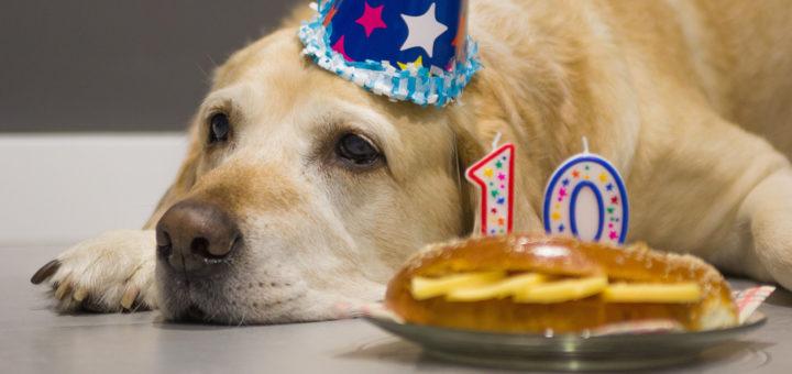 возраст собаки оценили