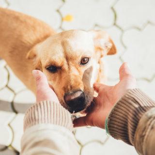 штрафы за жестокое обращение с животными