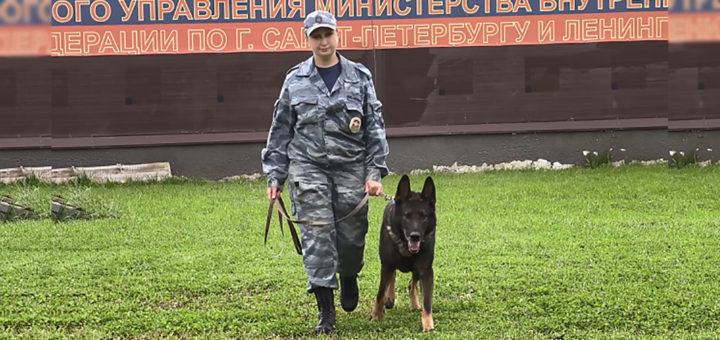 полицейская собака Волк-Меркурий