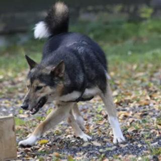 Шереметьево: собаки ищут коронавирус