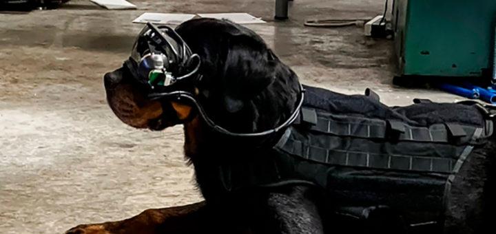 служебные собаки: очки дополненной реальности