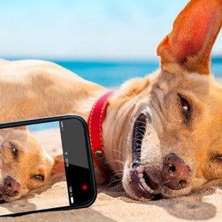 телефоны узнают собачий лай