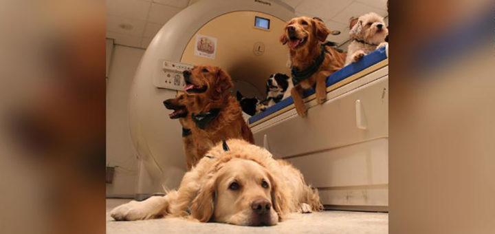 Реакция собаки изучена при помощи МРТ