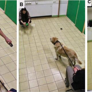 интеллект собак: эксперименты венгерских ученых