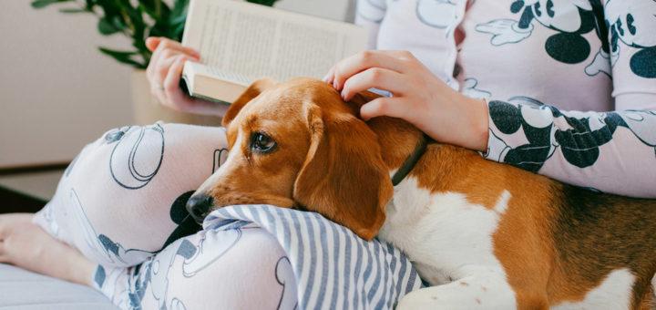 собака и коронавирус: факторы риска