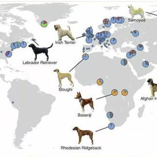 происхождение собак. Схема