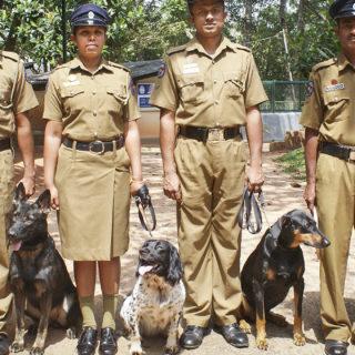 Шри-Ланка, полицейские собаки