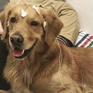 мозг собаки изучили в лаборатории