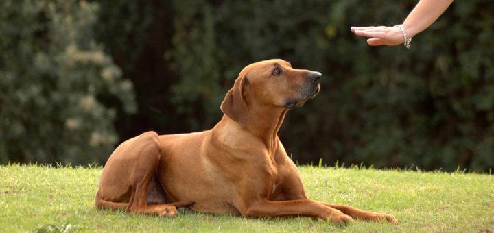 наказание собак неэффективно