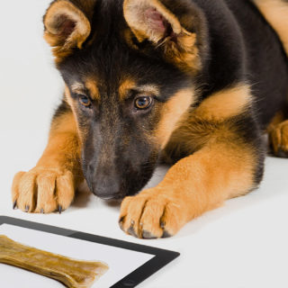Мозг собаки видит мир иначе
