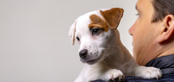 шансы познакомиться и собака