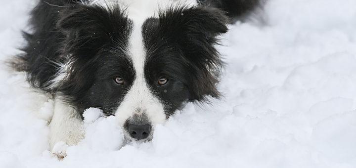 собака получила наследство
