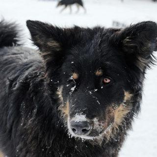 Улан-Удэ бродячая собака