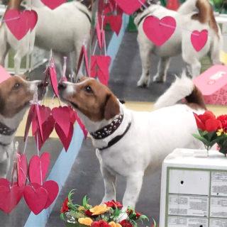 ноузворк: собака ищет источник запаха