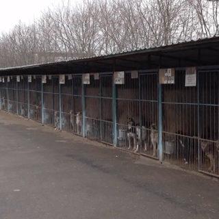 бездомные животные в приюте