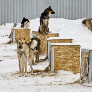 Югра бездомные животные
