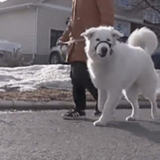 Канада. Собака Кловер