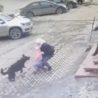 Саратов. Собака напала на ребенка