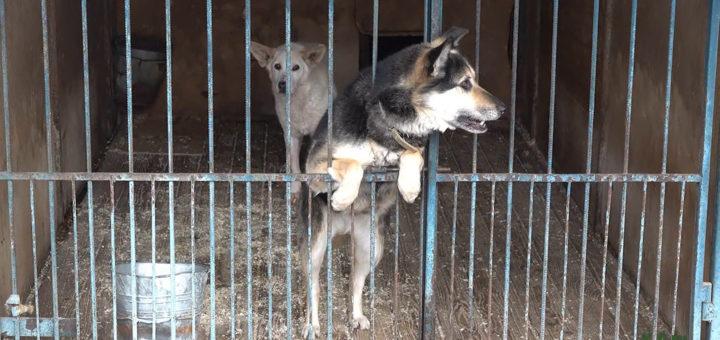 штраф за собаку: новая идея, как решить проблему бездомных животных