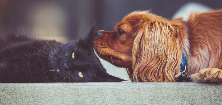 сколько собак и кошек в России