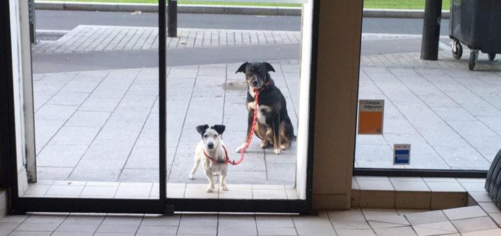 Привязать собаку у магазина - подвергнуть ее опасности