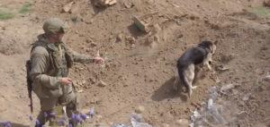 Нагорный Карабах: работает российский кинолог