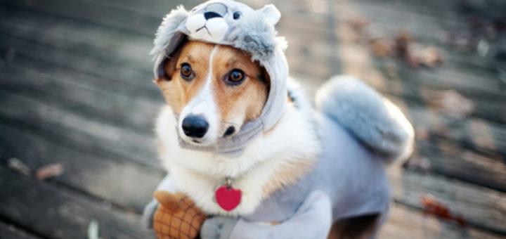 Одежда для собак может быть бесполезной