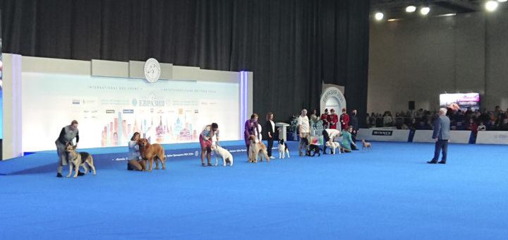 Выставка собак Евразия 2021