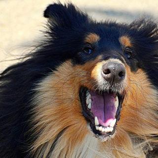 Самые злые собаки: порода, возраст, пол