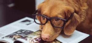 Способности собак к счету