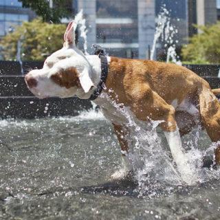 собака в жару
