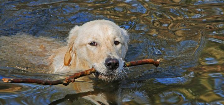 собаки в воде рискуют