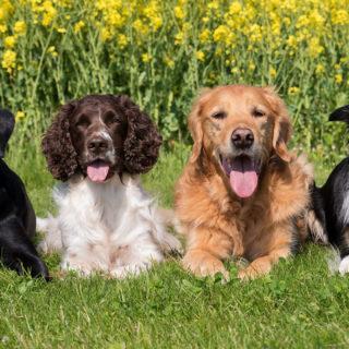 день собак