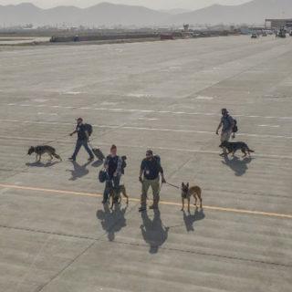 Афганистан. Эвакуация собак